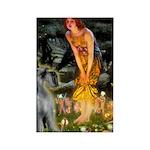 Fairies / G Schnauzer Rectangle Magnet
