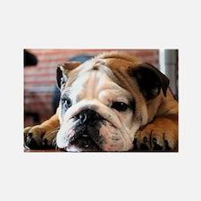 Funny English bulldog Rectangle Magnet