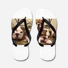English Bulldog Flip Flops
