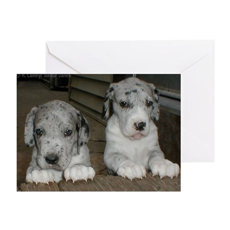 N Mrl pup girls Greeting Cards (Pk of 20)
