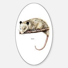 Opossum Possum Oval Decal