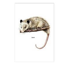 Opossum Possum Postcards (Package of 8)