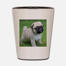 Unique Pug or pugs Shot Glass