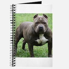Pitbull Journal
