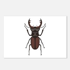 Stag Beetle Postcards (Package of 8)