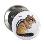Ground Squirrel Chipmunk 2.25