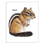 Ground Squirrel Chipmunk Small Poster