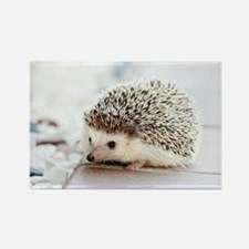 Cute Hedgehogs Rectangle Magnet