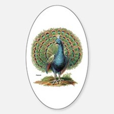 Peacock Peafowl Oval Decal