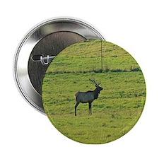 Bull Elk in a Field Button