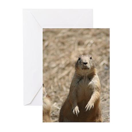 Prairie Dog Greeting Cards (Pk of 20)