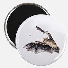Bat for Bat Lovers Magnet