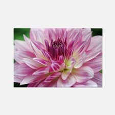 Cool Greetingcard Rectangle Magnet