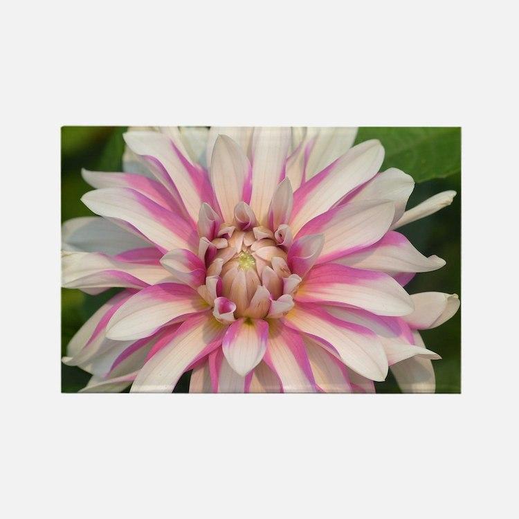 Cute Pink dahlia Rectangle Magnet