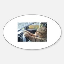 Driving Cat Decal