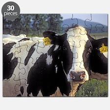 Moo Cows Puzzle
