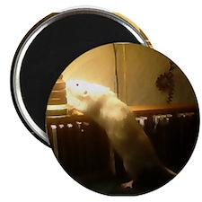 In the light dumbo Rat magnet