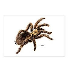 Tarantula Spider Postcards (Package of 8)