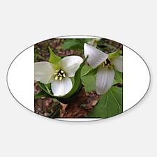 Cute Trillium Decal