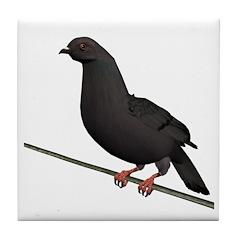 Dark Rock Dove Tile Coaster