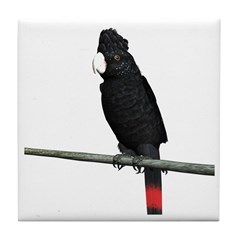 Red Tail Black Cockatoo Tile Coaster