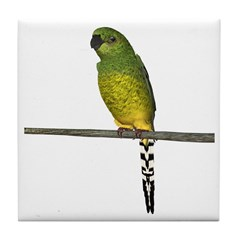 Night Parrot Tile Coaster