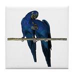 Hyacinth Macaw (Pair) Tile Coaster