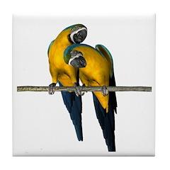Blue N Yellow Macaw (Pair) Tile Coaster