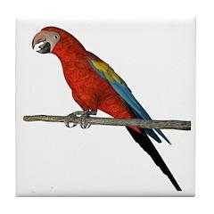 Scarlet Macaw Tile Coaster