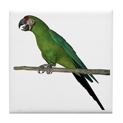 Military Macaw Tile Coaster
