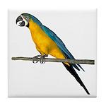 Blue N Yellow Macaw Tile Coaster