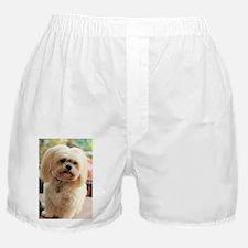 Koko blond lhasa Boxer Shorts