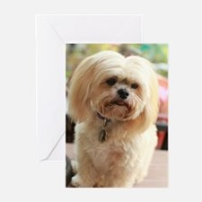 Koko blond lhasa Greeting Cards