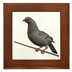 Checkered Rock Dove Framed Tile