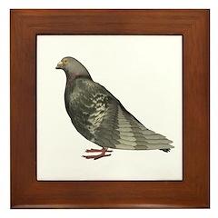 Pigeon Framed Tile
