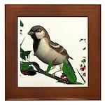 House Sparrow (male) Framed Tile