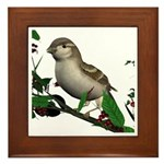 House Sparrow (female) Framed Tile