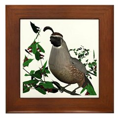California Quail (male) Framed Tile