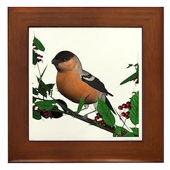 Bullfinch (male) Framed Tile