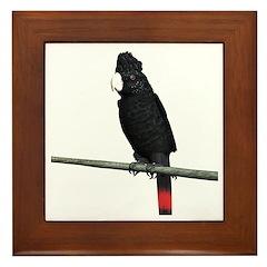 Redtail Black Cockatoo Framed Tile