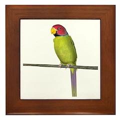 Plumhead Parakeet Framed Tile