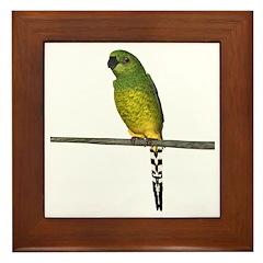 Night Parrot Framed Tile