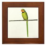 Ring Necked Parakeet Framed Tile