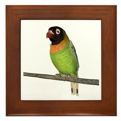 Black Cheeked Lovebird Framed Tile