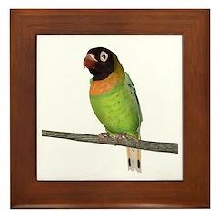 Black Cheeked Lovebird Framed Tile