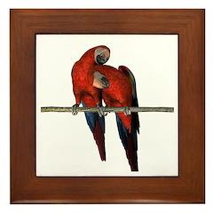Scarlet Macaw (Pair) Framed Tile