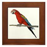 Scarlet Macaw Framed Tile