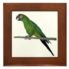 Military Macaw Framed Tile