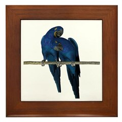 Hyacinth Macaw (Pair) Framed Tile