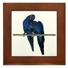 Hyacinth Macaw (Pair) Framed Tile